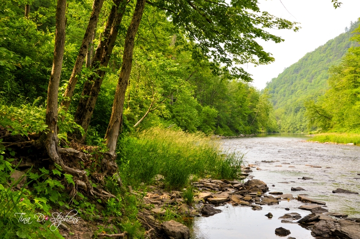a photo taken on the Pine Creek in Pennsylvania