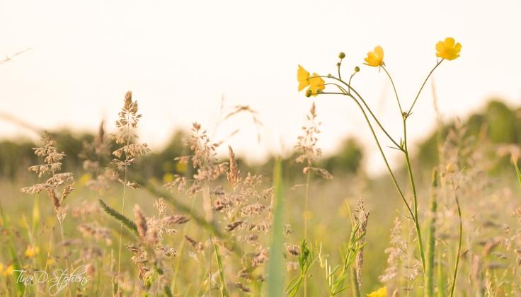 meadow-blog