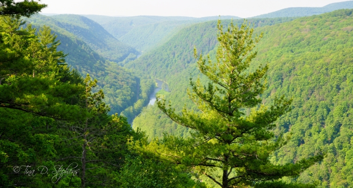 The Pine Creek Gorge in the Pennsylvania Grand Canyon