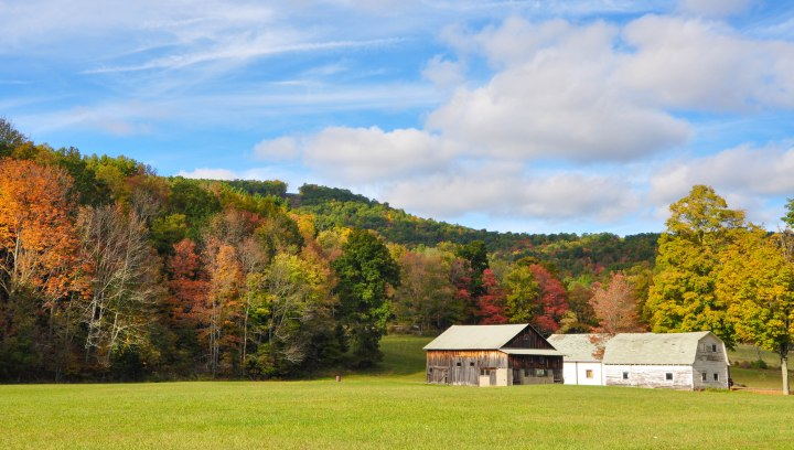 Pennsylvania fall foliage-photographed by Tina D. Stephens